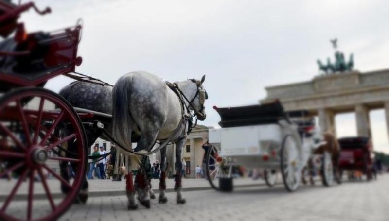 Новости: Лошадям не место в столице