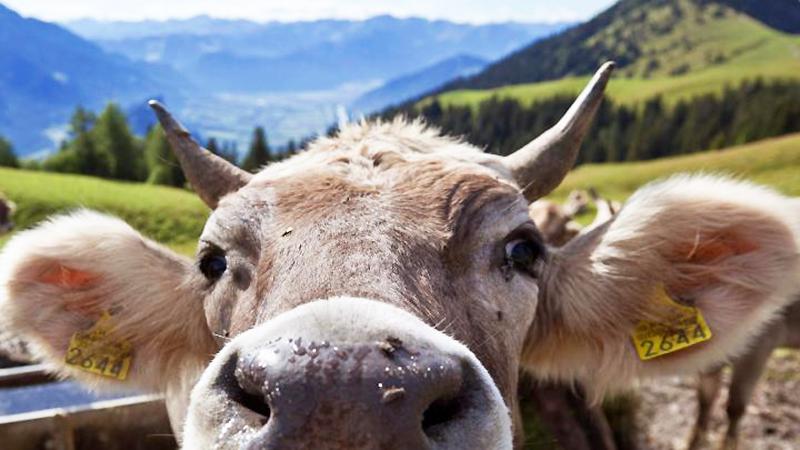 Новости: За рога необходимо поощрять деньгами