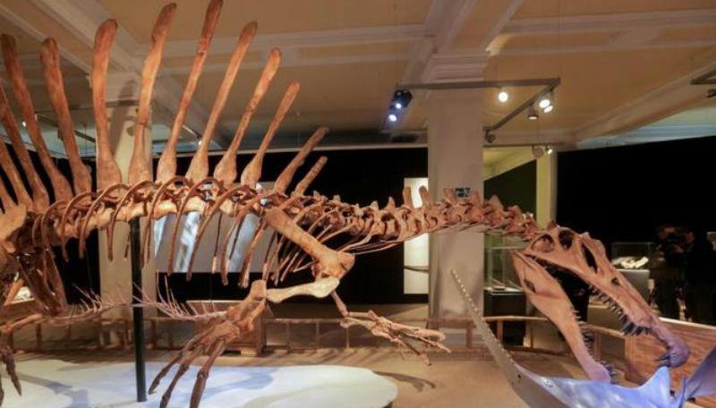 Досуг: В музее можно переночевать с динозавром