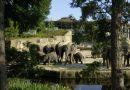 Чем кормят животных в кельнском зоопарке – меню