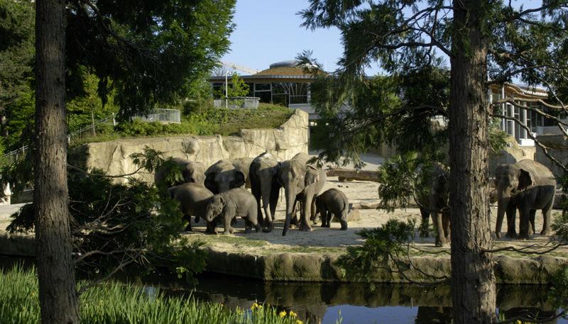 Галерея: Чем кормят животных в кельнском зоопарке – меню