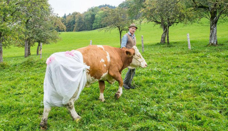 Здоровье: Свинская система: небезопасная еда