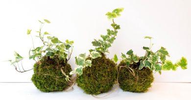 5 комнатных растений, которые эффективно очистят воздух в вашей квартире