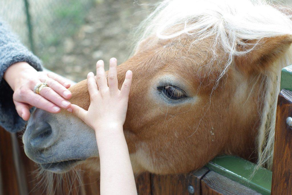Общество: В одном из хосписов Берлина больных утешает маленький пони