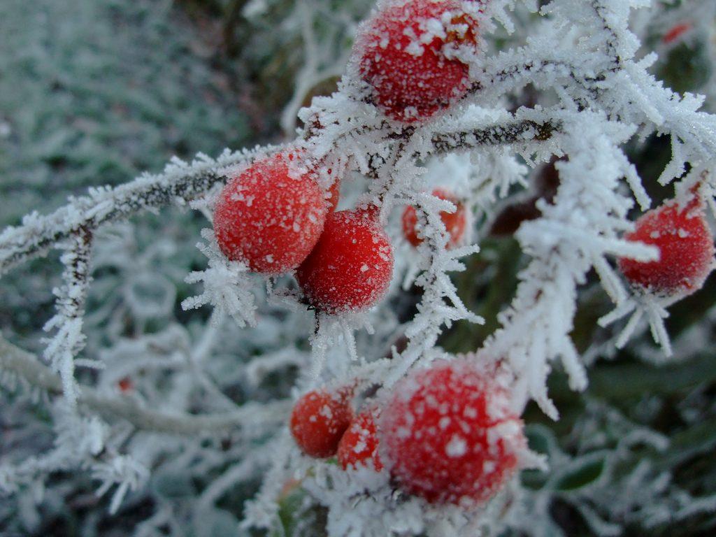 Погода: До -15°С: в Германию возвращается зима