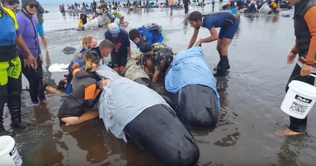 Отовсюду обо всем: В Новой Зеландии сотни дельфинов выбросились на сушу
