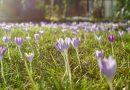 Погода в Германии: весеннее солнце прогреет воздух до +20°C