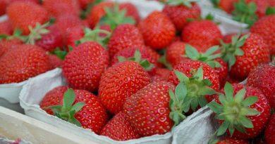 В этом году ожидается значительное повышение цен на клубнику