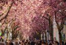 Одна из самых красивых улиц мира находится в Бонне