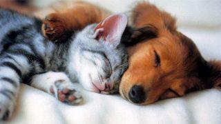 Животные в квартире: какие могут быть проблемы?