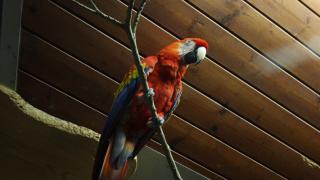 Попугай помог раскрыть убийство