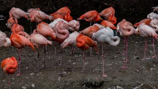 Достопримечательности Германии: зоопарк Хеллабрунн