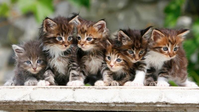 Полезные советы: Сегодня всемирный день кошки. Тонкости содержания