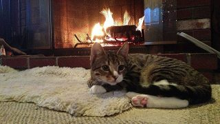 Кто спасает кошку при пожаре. И не только ее…
