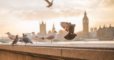 Что нужно знать об эмиграции в Великобританию