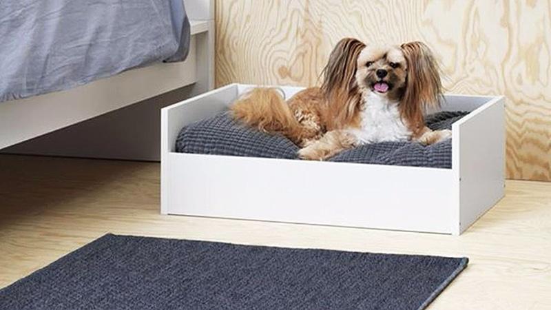 Общество: Фирменная мебель для собак и кошек