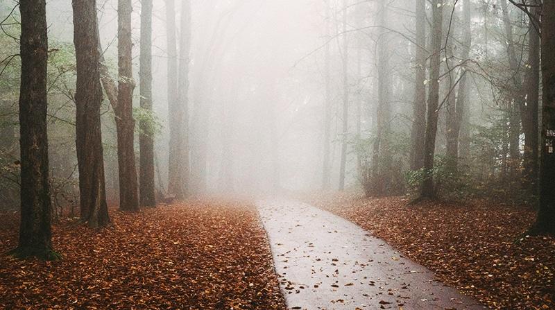 Погода: Погода: Германию накроет туманами