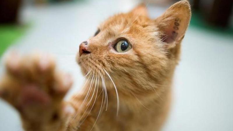 Деньги: В какую сумму обойдется содержание кошки в месяц