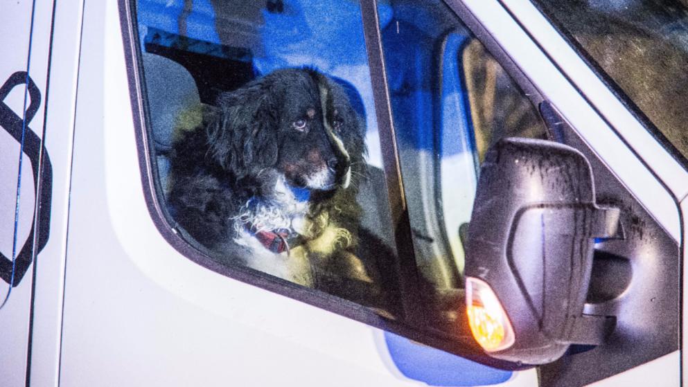 Общество: Верный пес Лео ждет возвращения погибшего хозяина