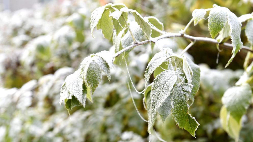 Погода: В Германию идет зима