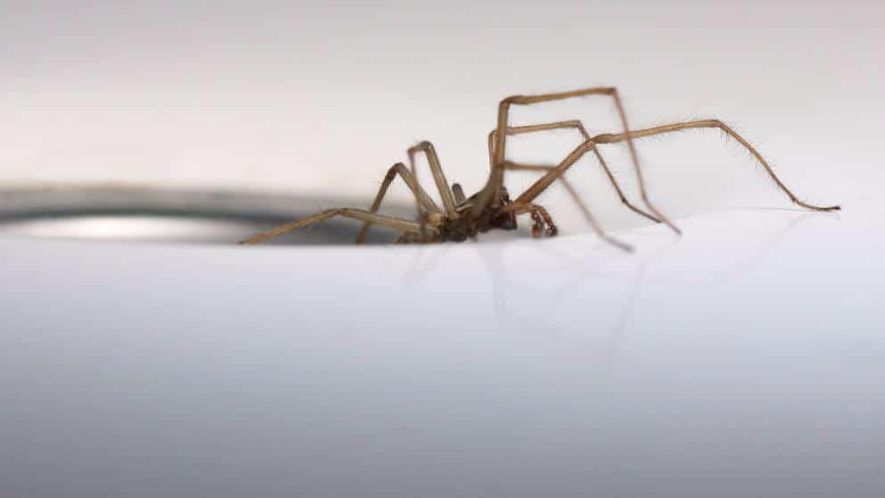 Новости: В Германии наблюдается осеннее нашествие пауков рис 3