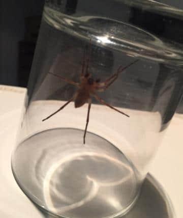 Новости: В Германии наблюдается осеннее нашествие пауков