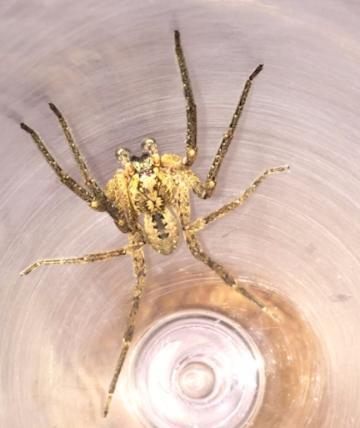 Новости: В Германии наблюдается осеннее нашествие пауков рис 2