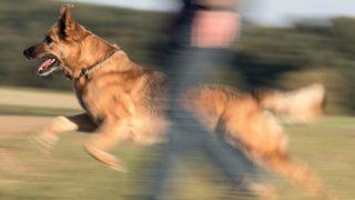 Права и обязанности владельца собаки: ответственность за укус животного
