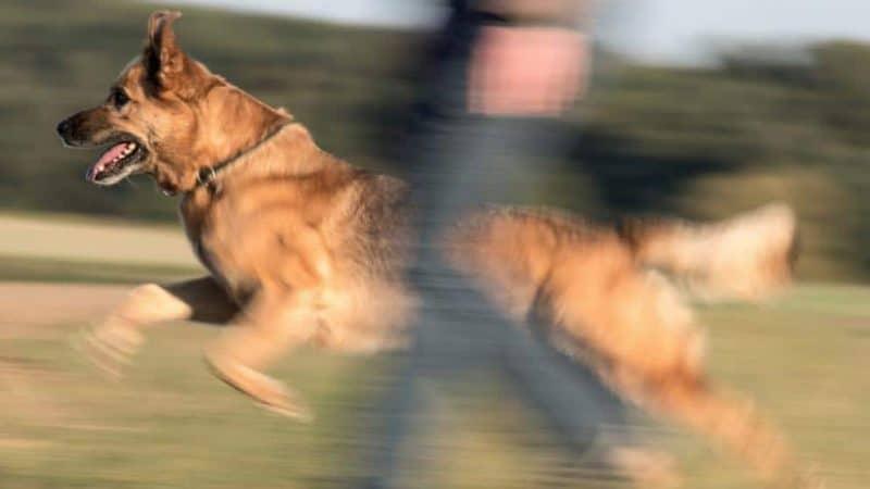 Закон и право: Права и обязанности владельцев собак: куда можно брать с собой животных