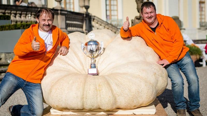 Новости: У баварцев тыква больше: почти 800 килограммов