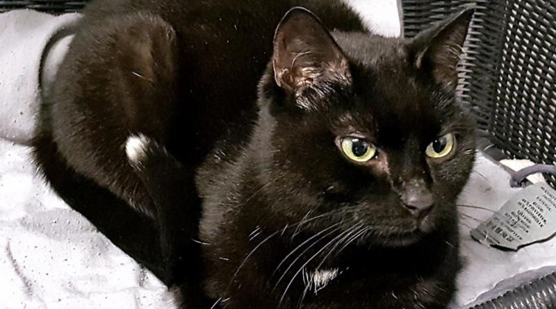 Происшествия: Кошка неделю провела в камере хранения