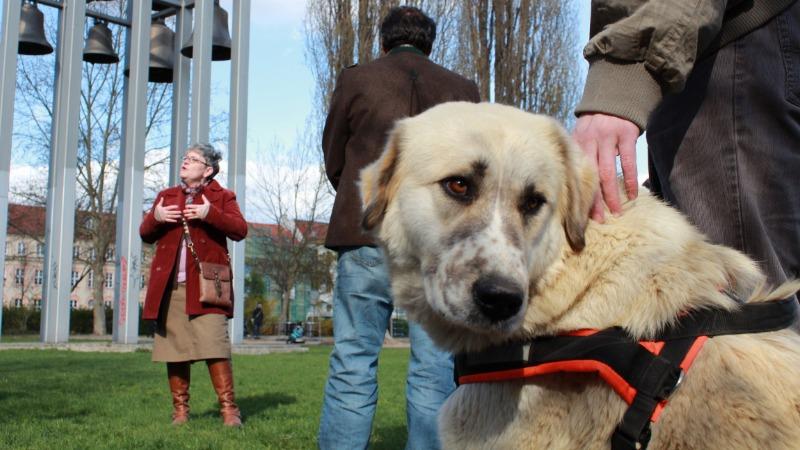 Здоровье: Владельцы собак и живут дольше, и выглядят здоровее