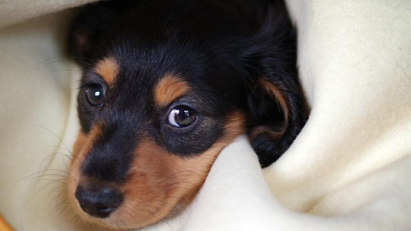 Происшествия: Грабители убили целую собачью семью