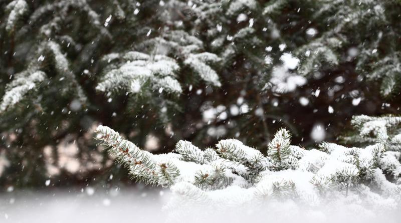 Погода: Преждевременный приход зимы в Германию: где скоро выпадет первый снег?