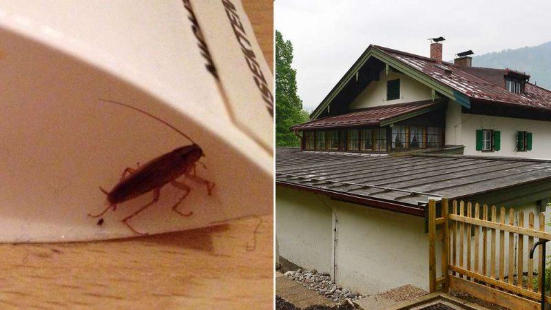 Общество: Беженцы живут в приютах с тараканами