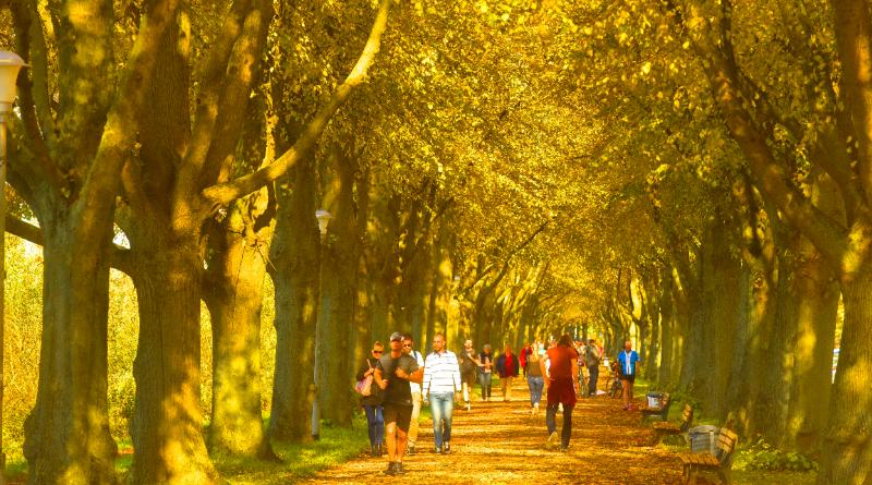 Погода: Зима подождет: в Германию идет потепление