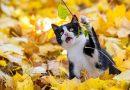 Осторожно! Эти растения опасные для кошек
