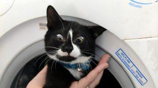 Жители Осло постирали кота в машинке