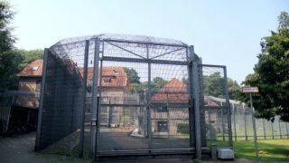 Как живут в тюрьме немецкие педофилы?
