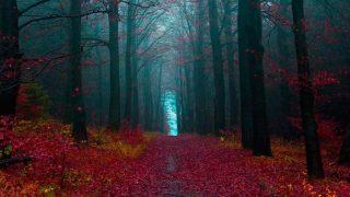 Шварцвальд – Сказка Черного леса