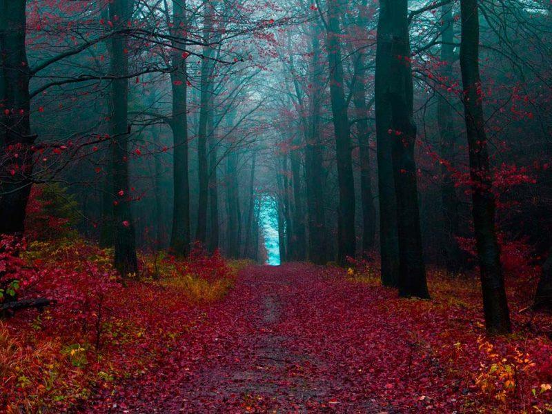 Культура: Шварцвальд – сказка Черного леса