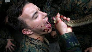 Морпехи тренируются на кобрах (+видео)