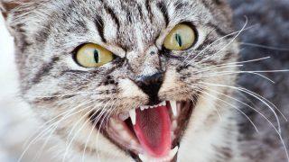 Кошка, как орудие преступления: заседание по делу отменили из-за гриппа