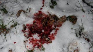 Кровавый след на снегу: полиция пытается разгадать загадку