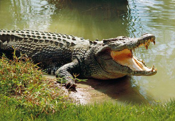Отовсюду обо всем: Крокодил накинулся на пастора во время обряда крещения