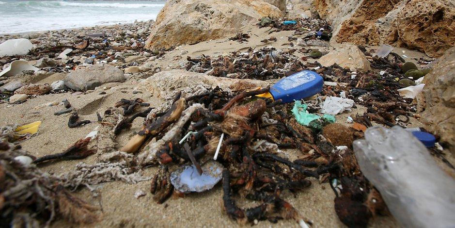 Отовсюду обо всем: Фекалии и мусор: пляжи Мальорки больше не такие манящие
