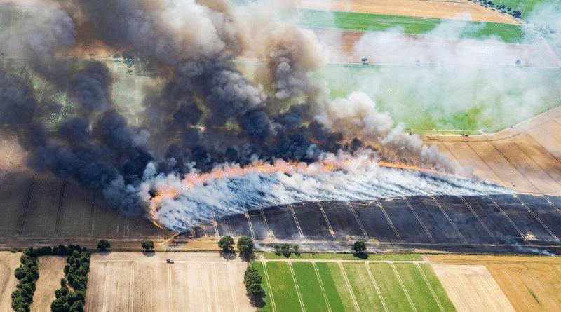 Общество: Пожароопасный сезон в Германии: что обязательно нужно знать