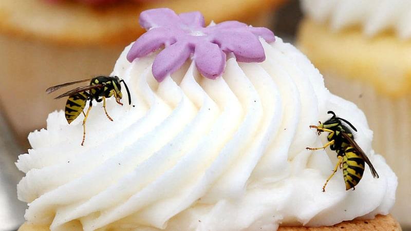 Общество: Убийство одной осы может обойтись в €50 тысяч
