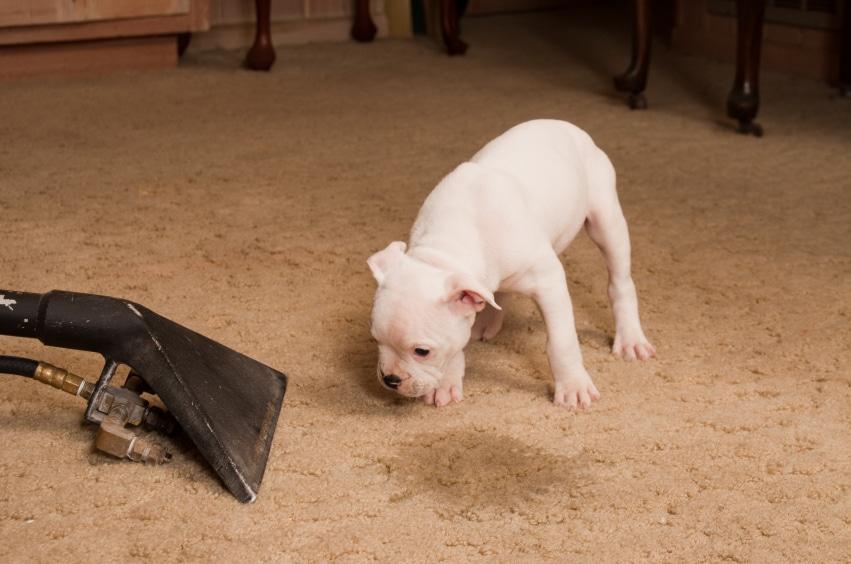 Полезные советы: Как вывести пятна на ковре: простые и действенные способы