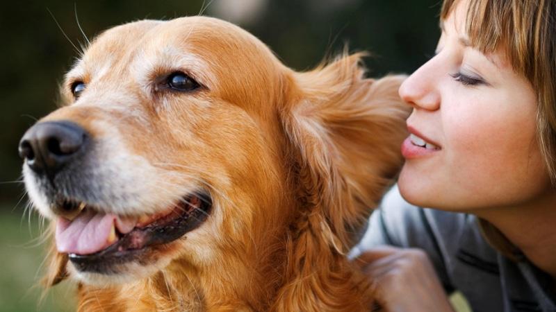 Полезные советы: Почему важно говорить с собакой и как делать это правильно?